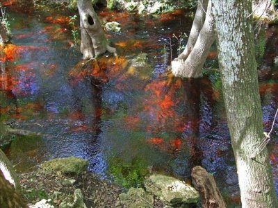 The red water shows best where the sun shines through the trees