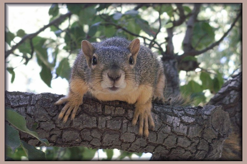 Squirrely Bud