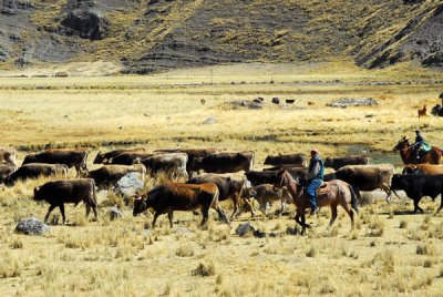 Peruvian cowboys, near Santa Rosa, Altiplano of Puno Region