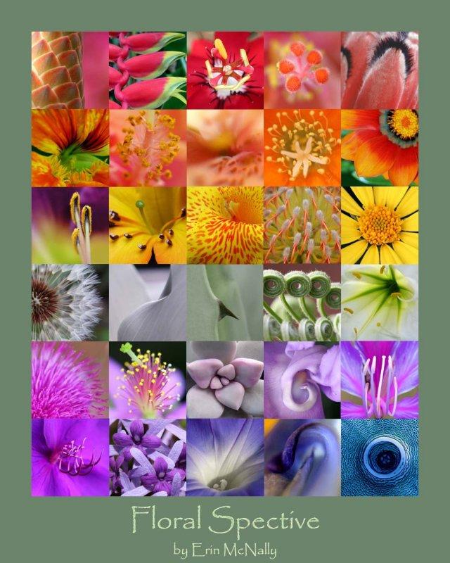 Floral Spective IV