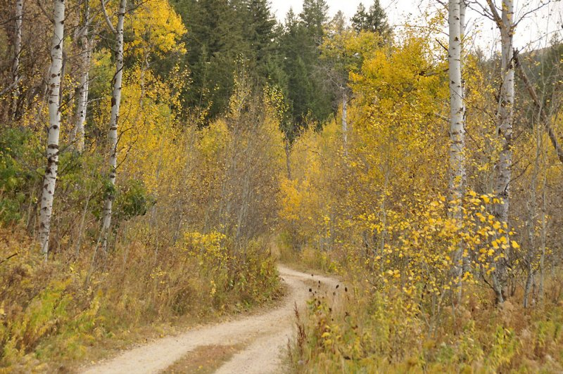our country driveway in autumn _DSC9950.jpg