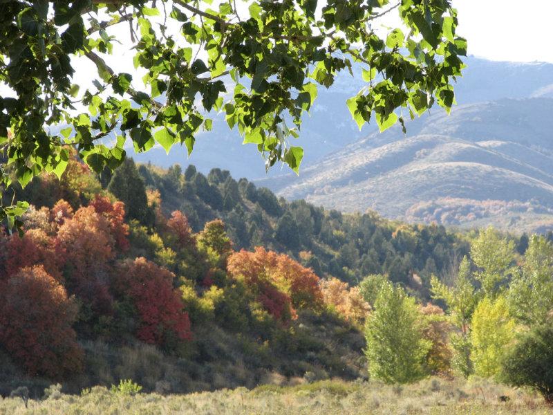 Autumn near McCammon IMG_0874.jpg