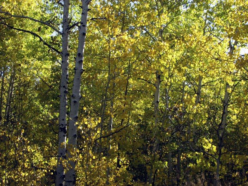 autumn IMG_1053.jpg