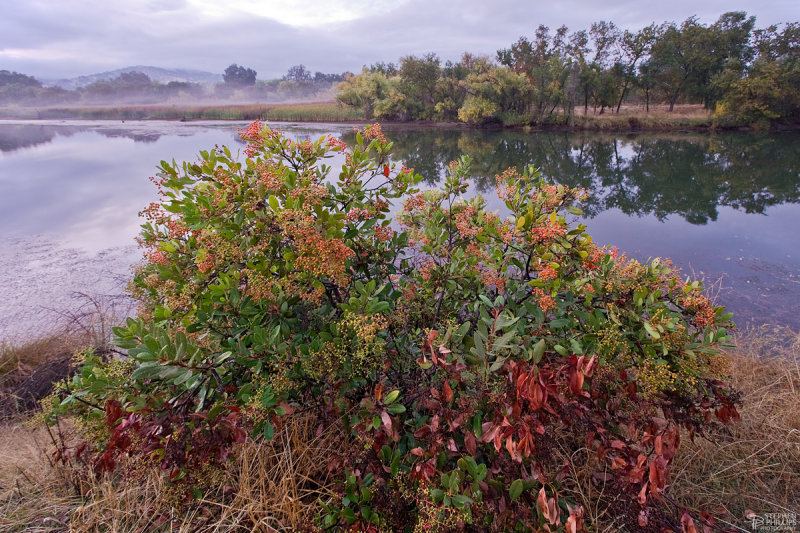 Autumn Along Lake Solano