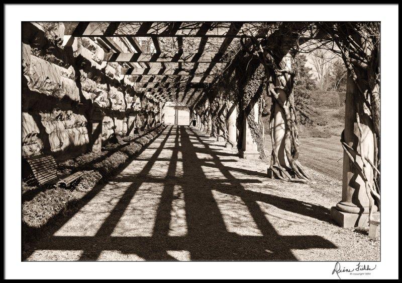 Arbor at Biltmore