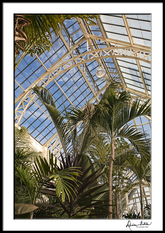 Biltmore Conservatory Palm House