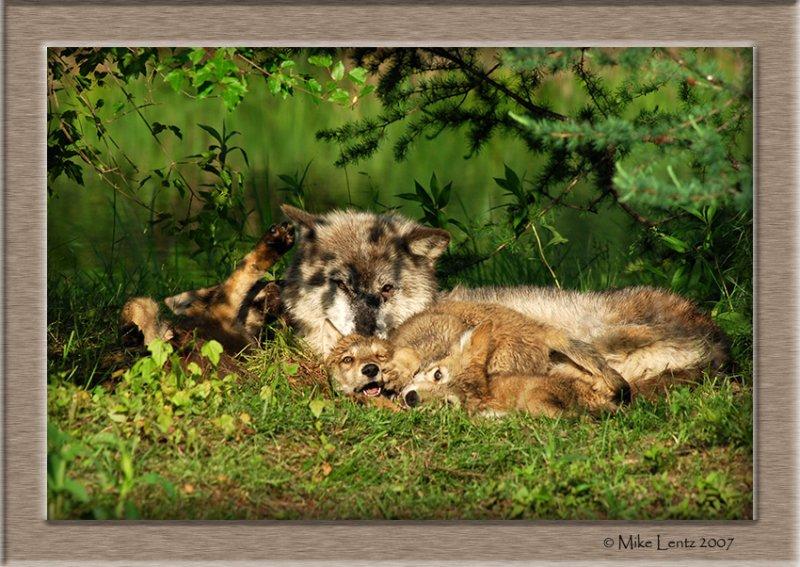 Timberwolves playing
