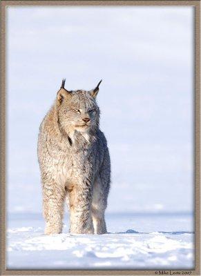 Lynx upright