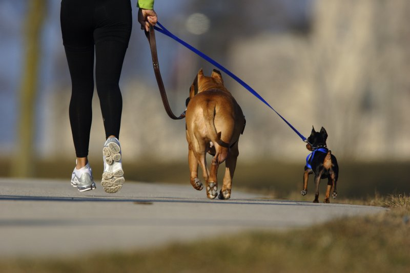 Dogs on a Leash
