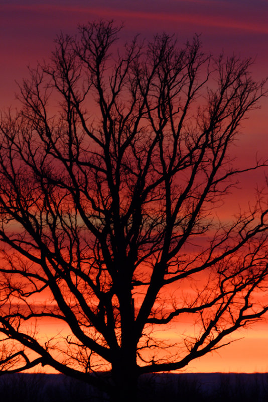 Collins Marsh Sunset