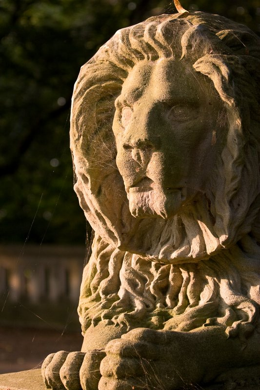 Lake Park Lion in the Morning Sun
