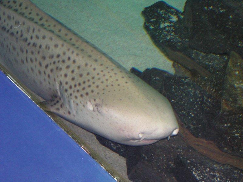 Laquarium un requin blanc