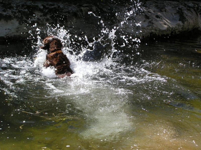 ....  pas vraiment une nageuse émérite