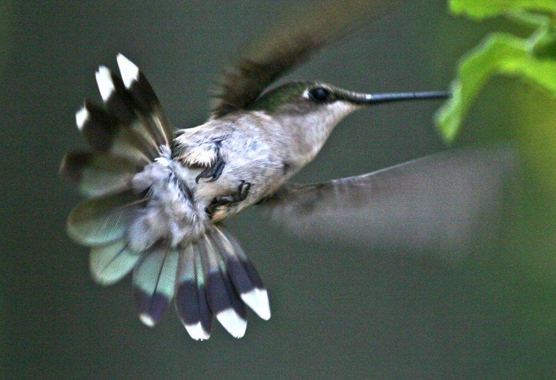IMG_0204-colibri=900.jpg