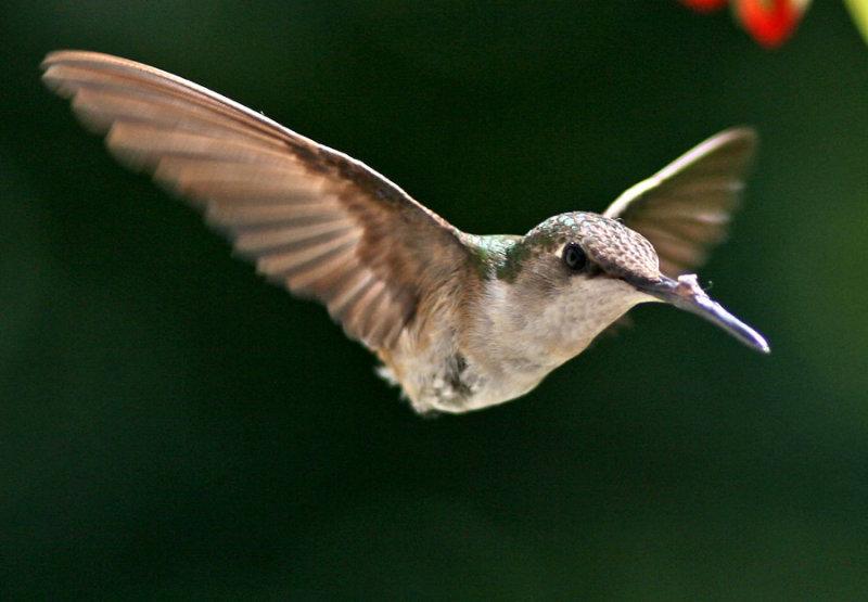 IMG_0280--colibri=900.jpg