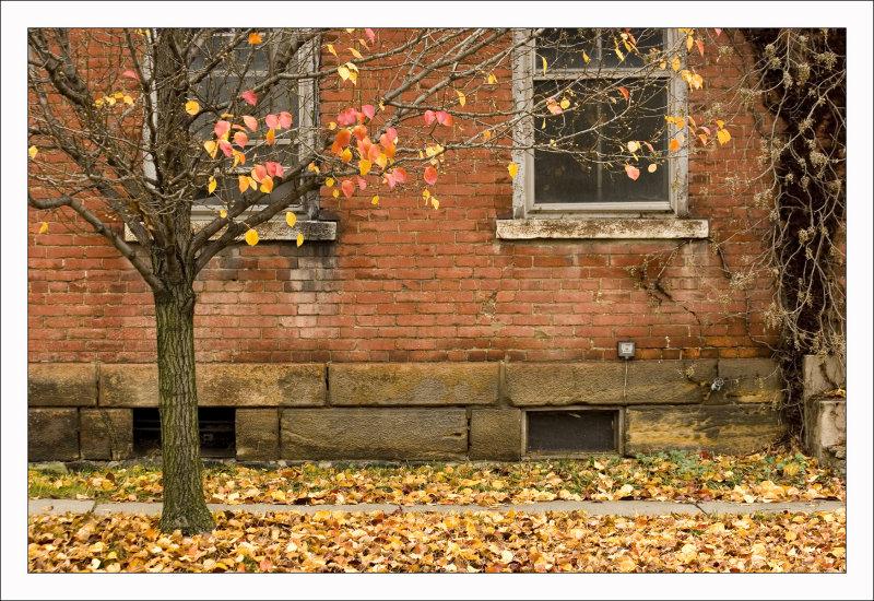 Last of Autumn Leaves