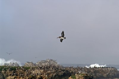Pacific Grove/Asilomar 14