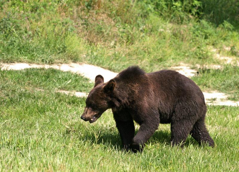 Six Flags Wild Safari - Baby Bear