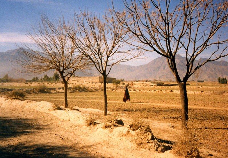 Three trees and a female pedestrian-FATA