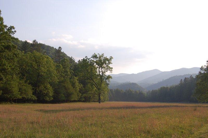 Cataloochee Meadow.jpg