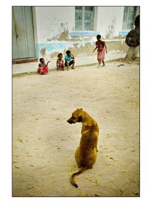 Playful Doggy