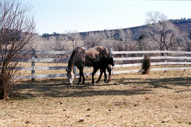 Hitch Rack Ranch