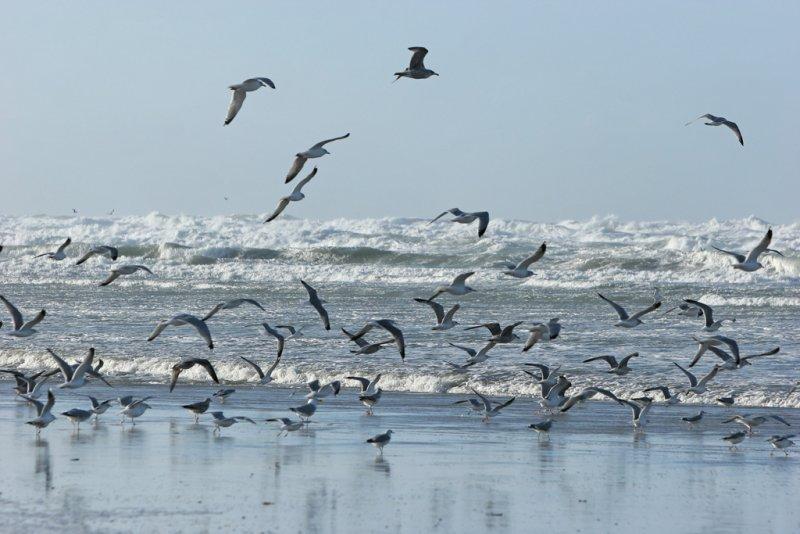 Balade dans la baie dAuthie le lundi 1er janvier 2007 avec un vent de 100-120 km/h !