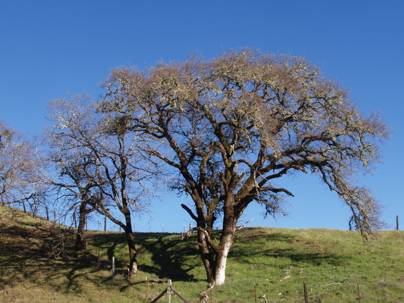 From the Dry Creek Road,Sonoma III