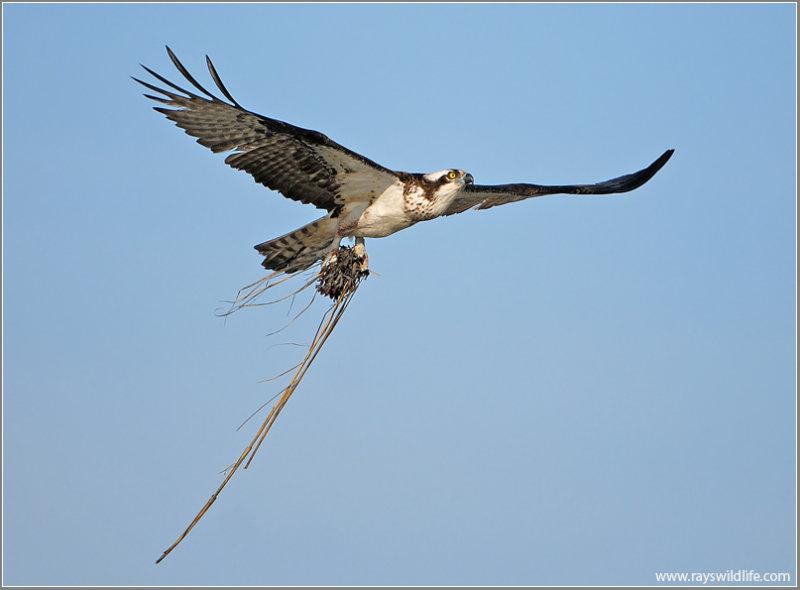 Osprey 30