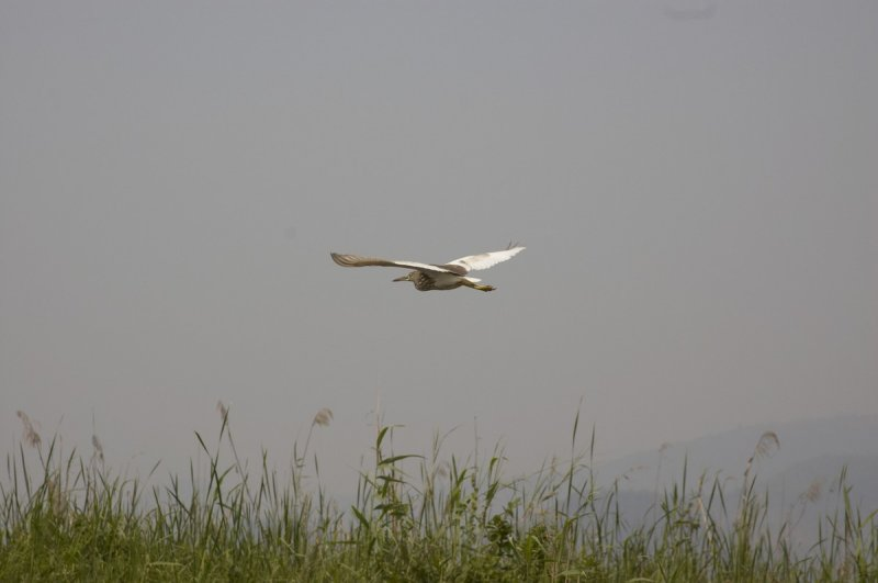 Bird over Inle Lake