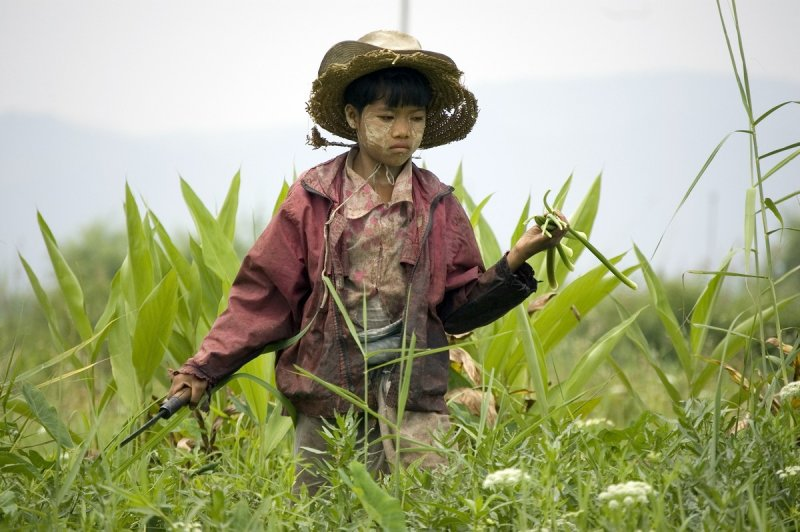 Young farmer, Inle Lake