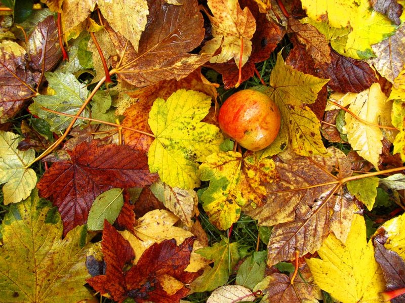 28th October Autumnal