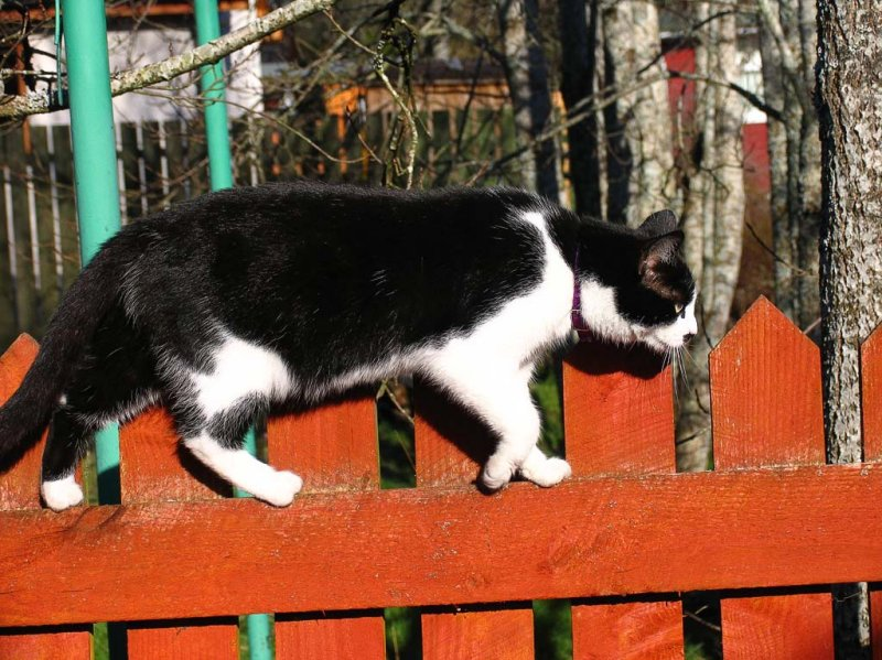 Tink on the Fence