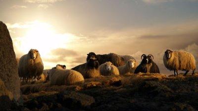 Rollur við Grindavík