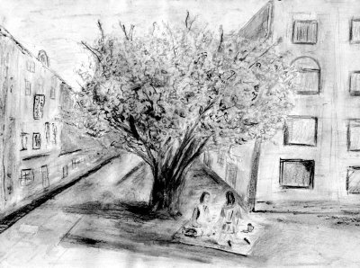 Cherry Blossom Tree  - April 2007