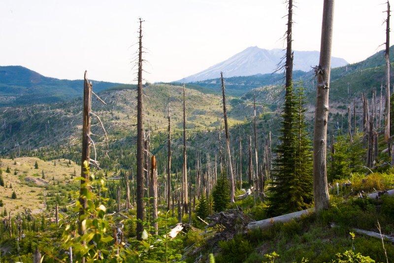 July 11 07 Mt St Helens-23.jpg
