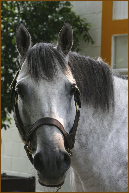 Monarchos - 2001 Kentucky Derby Winner