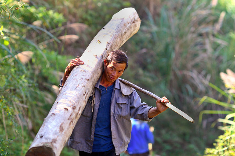 6059 Balancing his cargo with leverage using a stick as he walks up the hill to deposit this log and repeat the process.