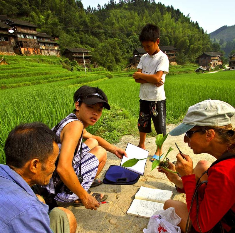 3467 Examing a plant in the field with a local Kam plant expert Yang Chang Jun.