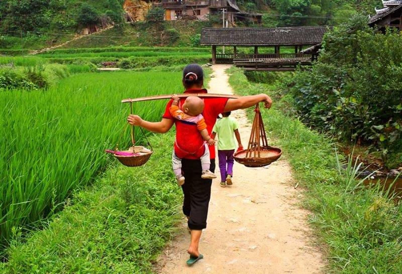 4164 Taking prepared rice for new drum tower dedication. *** Information on the wind rain bridge.***