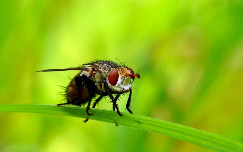 0940 Class: Diptera