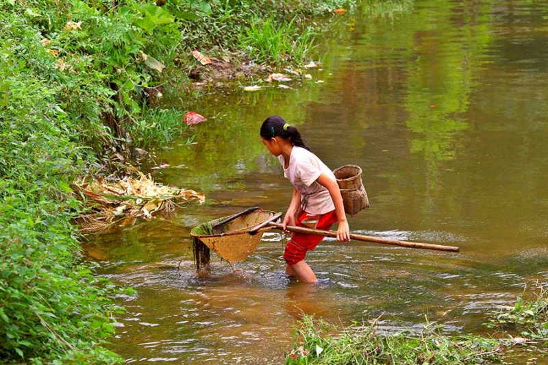 1212 Young girl netting fish in the main village steam.
