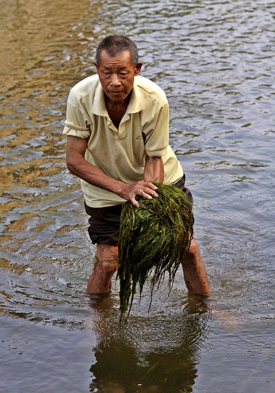2737 A renewable and plentiful fish feed.
