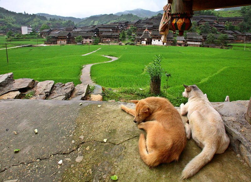 2225 Dogs eye view.