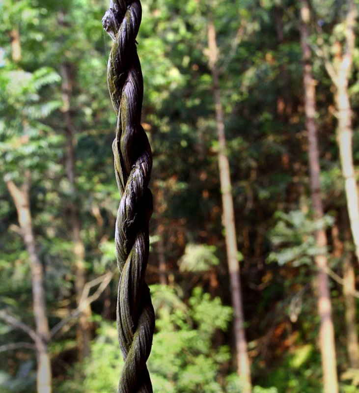 9923 Twisted vine. In use for 9 years, twisted vines are very strong, durable and rot resistant.