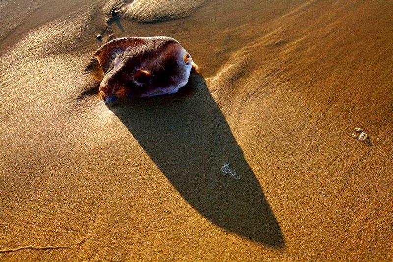 Sunfish head