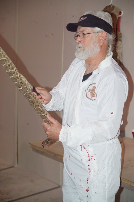 Splitting the rattlesnake up its belly from the head area to the tail