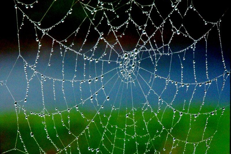 262  SPIDER DEW DROPS