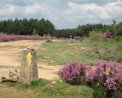 Yellow arrows and flowers on top of Montes de Oca