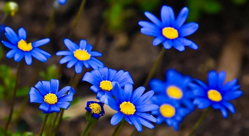 Blue _MG_0655.jpg